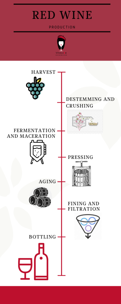 Red Wine Production - Infographic