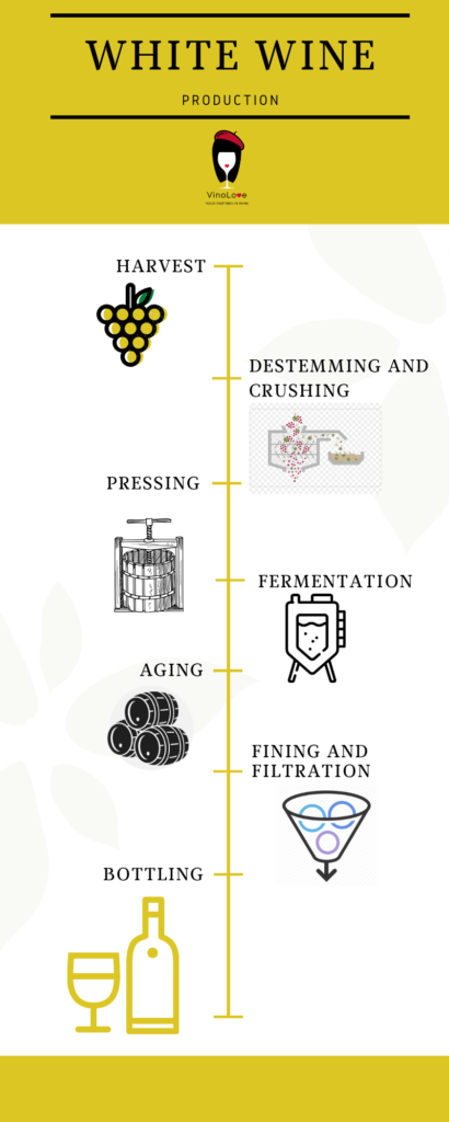 White Wine Production - Infographic