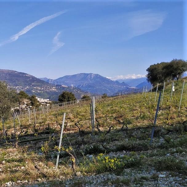 visit vineyards