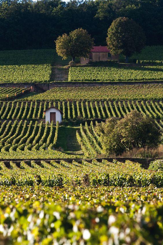 terroir of Burgundy lieu-dit