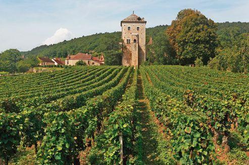 terroir of burgundy