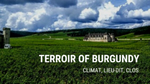 terroir of Burgundy