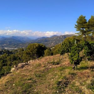 french riviera tour to the vineyard